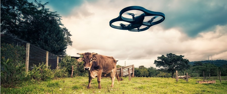 UAV with cow